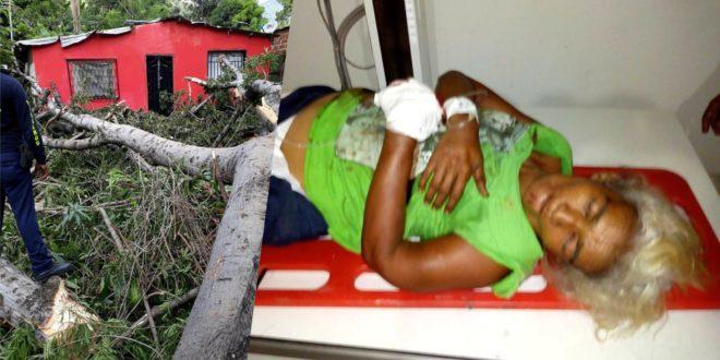 Mujer resultó herida al caer un árbol de bonga sobre su humilde vivienda