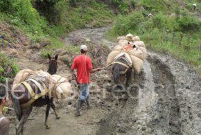 Exigen mantenimiento de vías rurales en época de verano para evitar perjuicios a productores